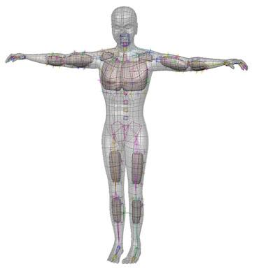 Muscle Systems Tutorial